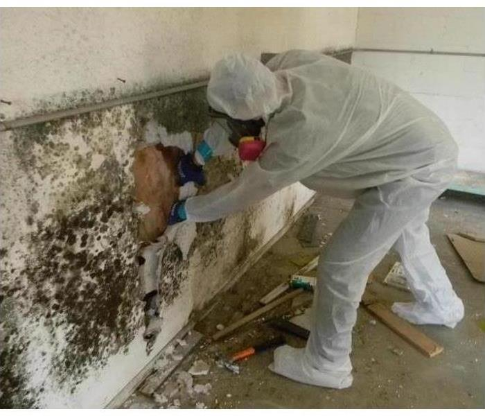 Extensive mold damage is shown on a wall being cleaned by a tech.